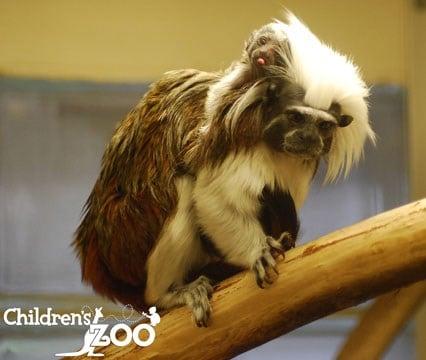 (Source: Saginaw Children's Zoo)