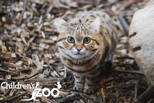 Meeka (Source: Saginaw Children's Zoo)