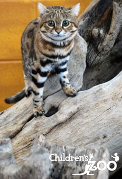 Tut (Source: Saginaw Children's Zoo)