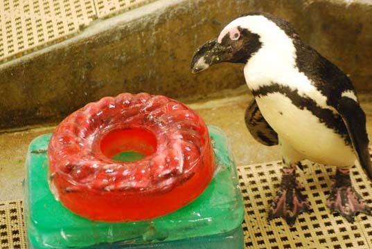 Don the penguin (Source: Saginaw Children's Zoo)