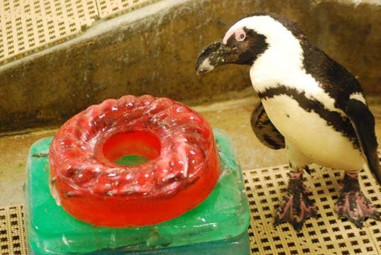 Don the penguin (Source: Saginaw Children's Zoo)