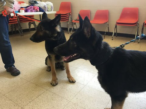 2 German Shepherds taken from home (Source: WNEM)