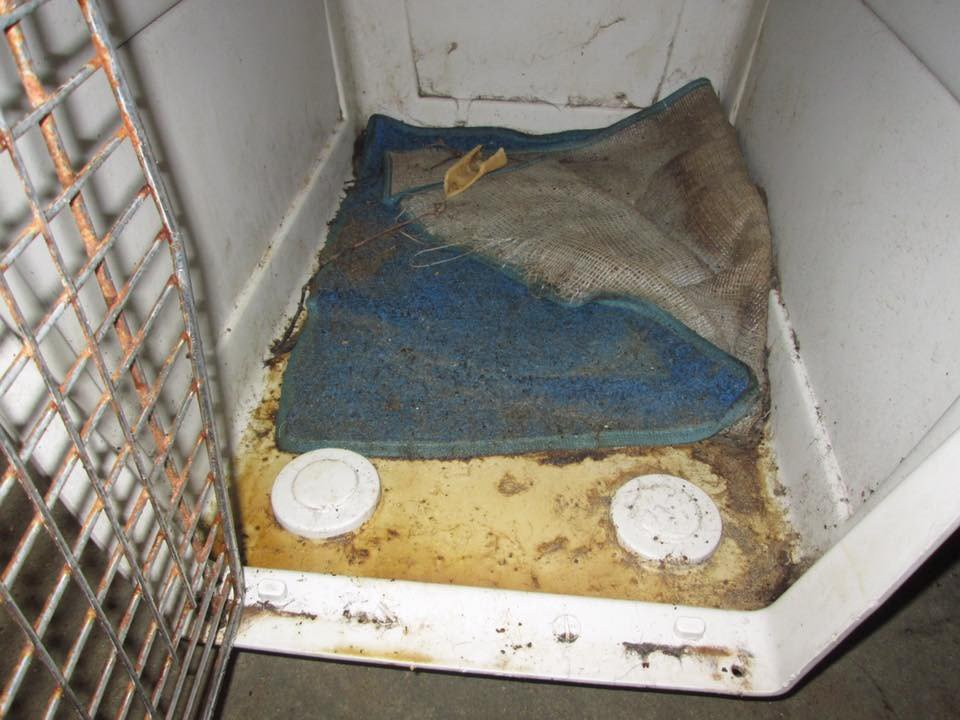 This photo shows the inside of the cage the dog was kept in. (Source: GCSO)