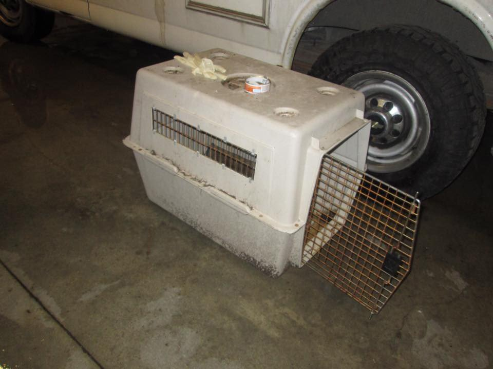 This photo shows the cage the dog was kept in. (Source: GCSO)