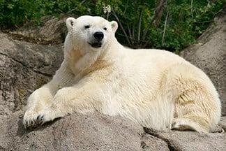 Source: Indianapolis Zoo