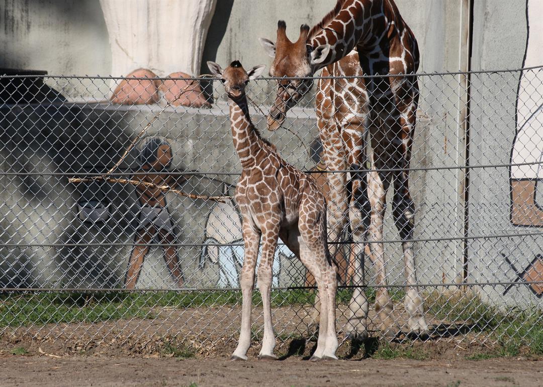 Source: Detroit Zoo