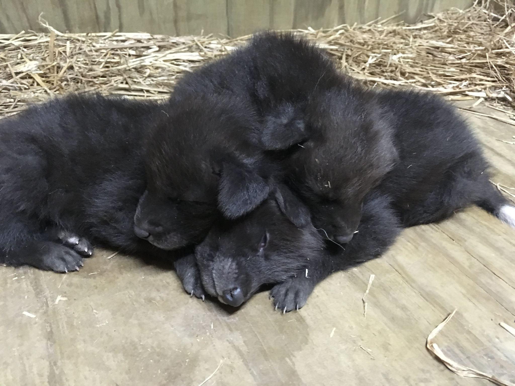 Courtesy: Little Rock Zoo