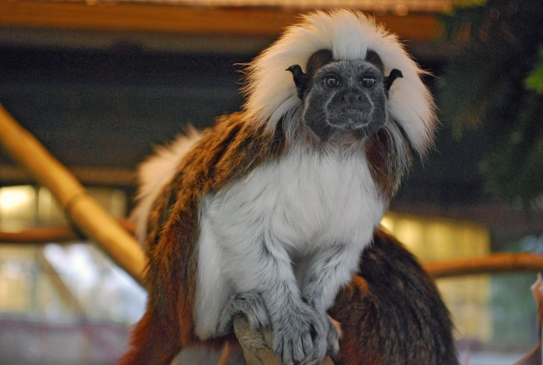 Source: Saginaw Children's Zoo