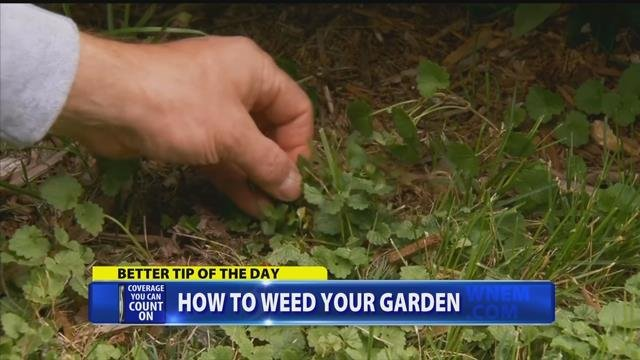The best way to weed your garden