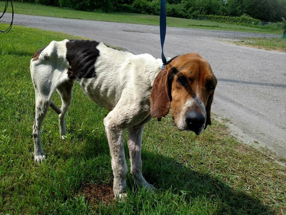 (Source: Arenac County Animal Control)