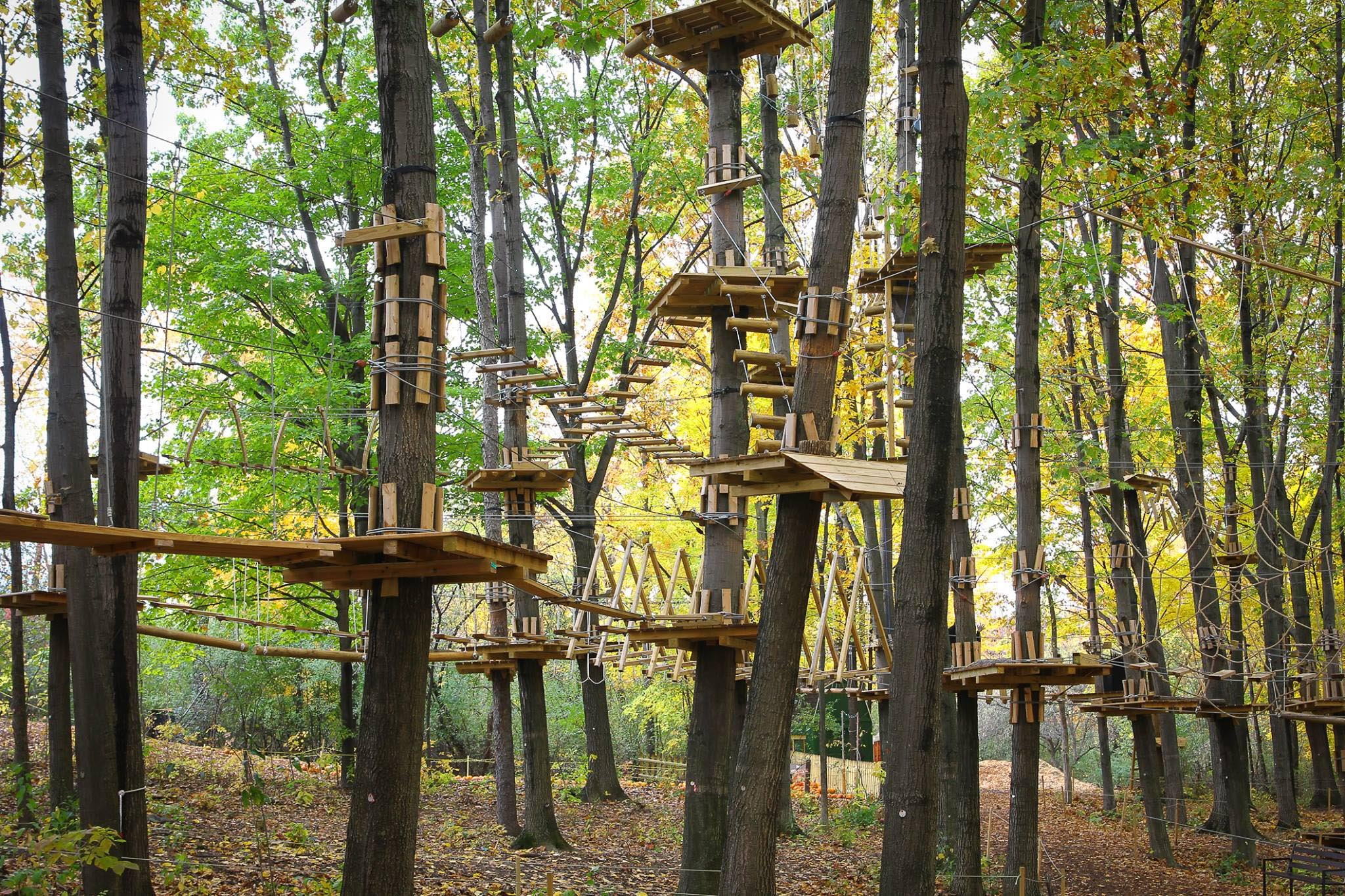 Source: Frankenmuth Aerial Park