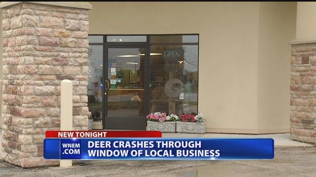 Video: Spooked deer crashes through window of Saginaw furniture store