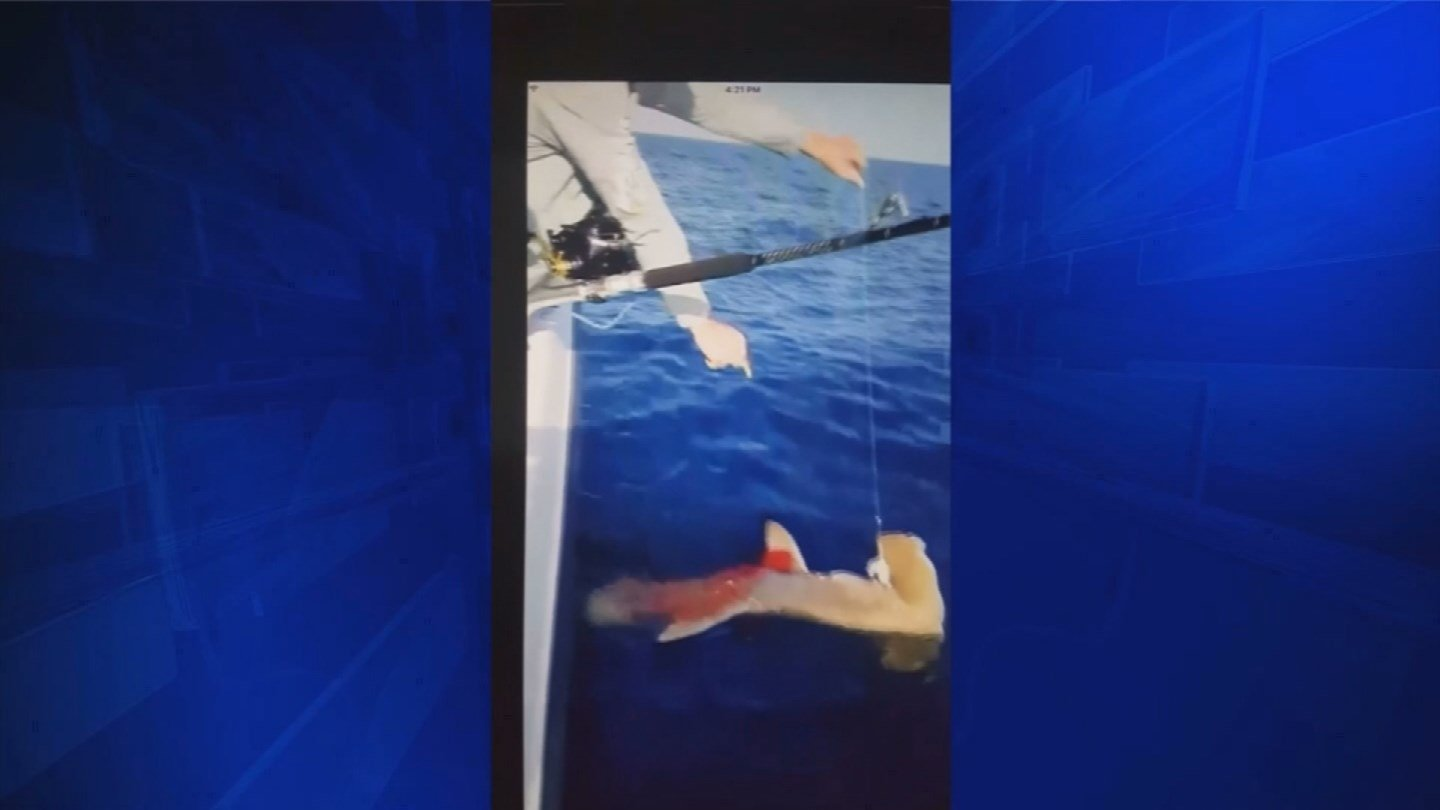 MTV Reality Star Under Investigation for Shark Shooting Video