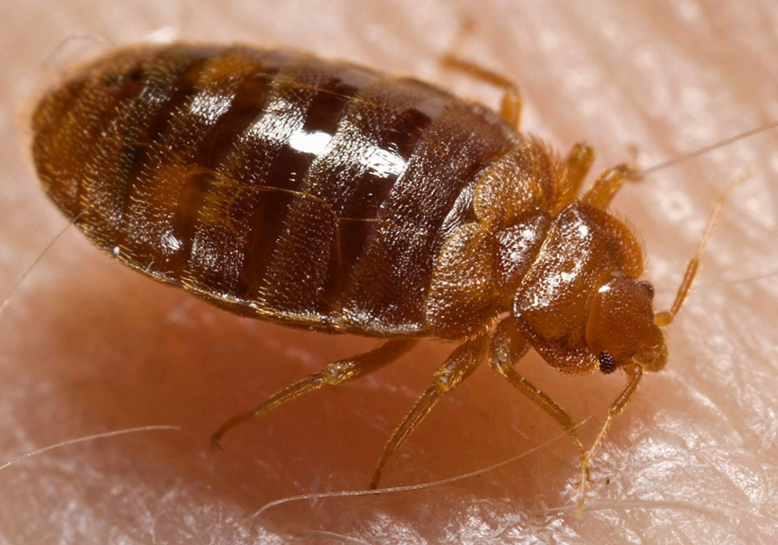Cities rank on Orkin's list of top 50 cities for bed bugs