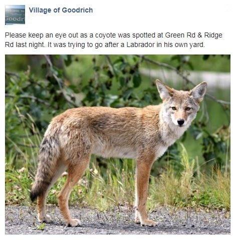 Public Post on Village of Goodrich Facebook Page