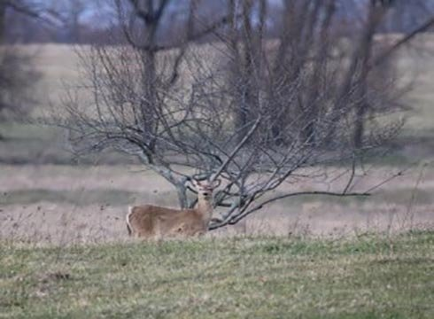 DNR predicts slightly better year for deer hunting