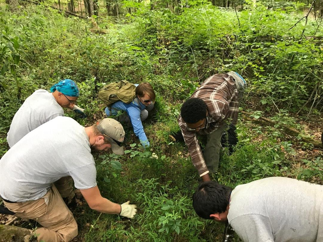 Volunteers hand-remove a small patch of Japanese stiltgrass near the primary infestation in Scio Township, Washtenaw County. Photo courtesy Michigan DNR.