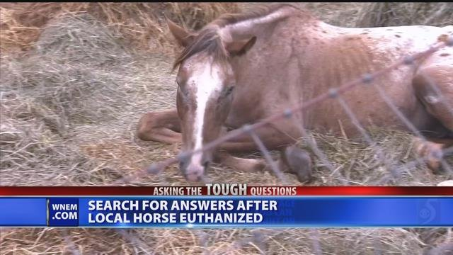 Video: Treatment under investigation after local horse euthanized