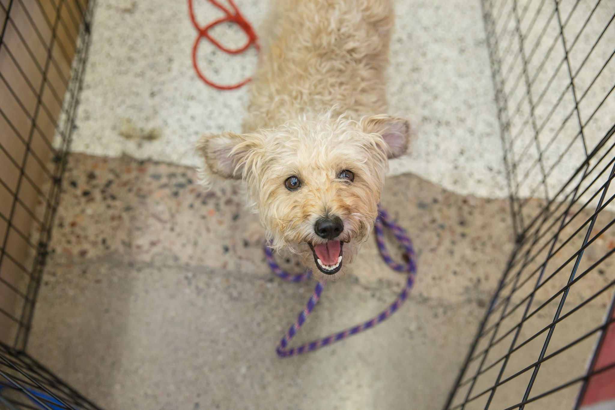 hundreds of pets available for free adoption this weekend wnem tv 5