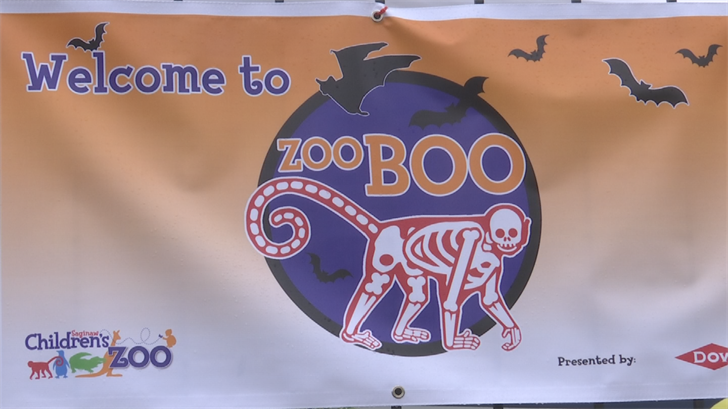 should zoos be booed Should zoos be banned i think they shouldanimal get less space and r not active at allwhat do u thinki want to publish an article so i want ur.