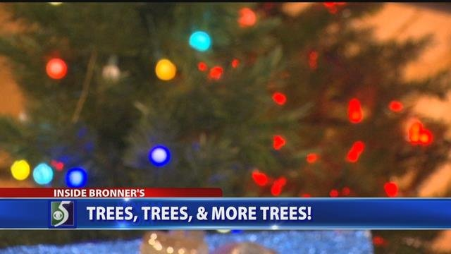 Video: Christmas trees at Bronner's
