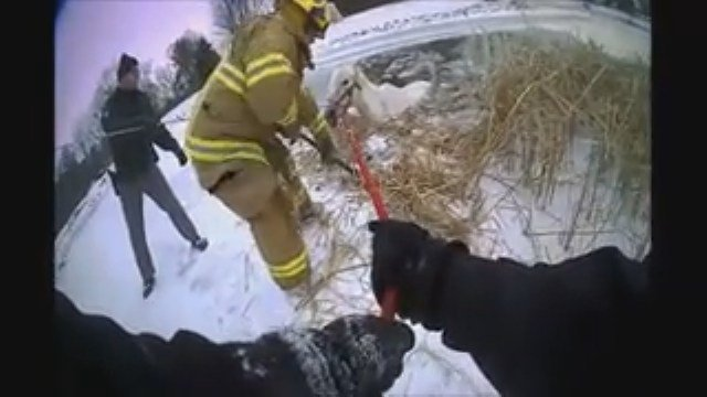 Deputies rescue horse from frozen pond