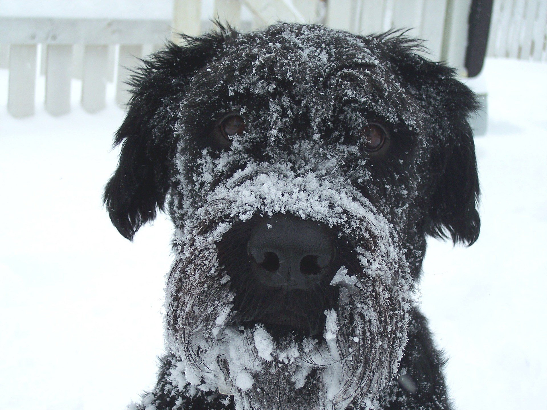 Caring For Your Pet In The Dangerous Cold Wnem Tv 5