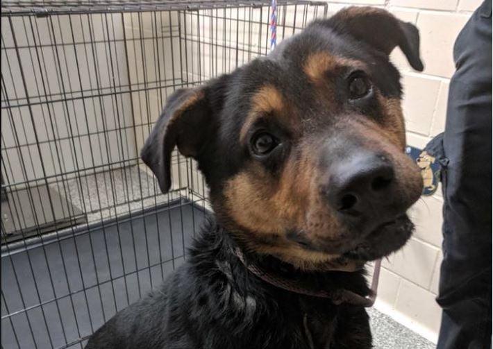 Courtesy: Detroit Dog Rescue