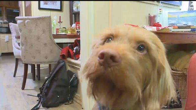 Kansas Official Puts Kibosh On Dog's Gubernatorial Campaign