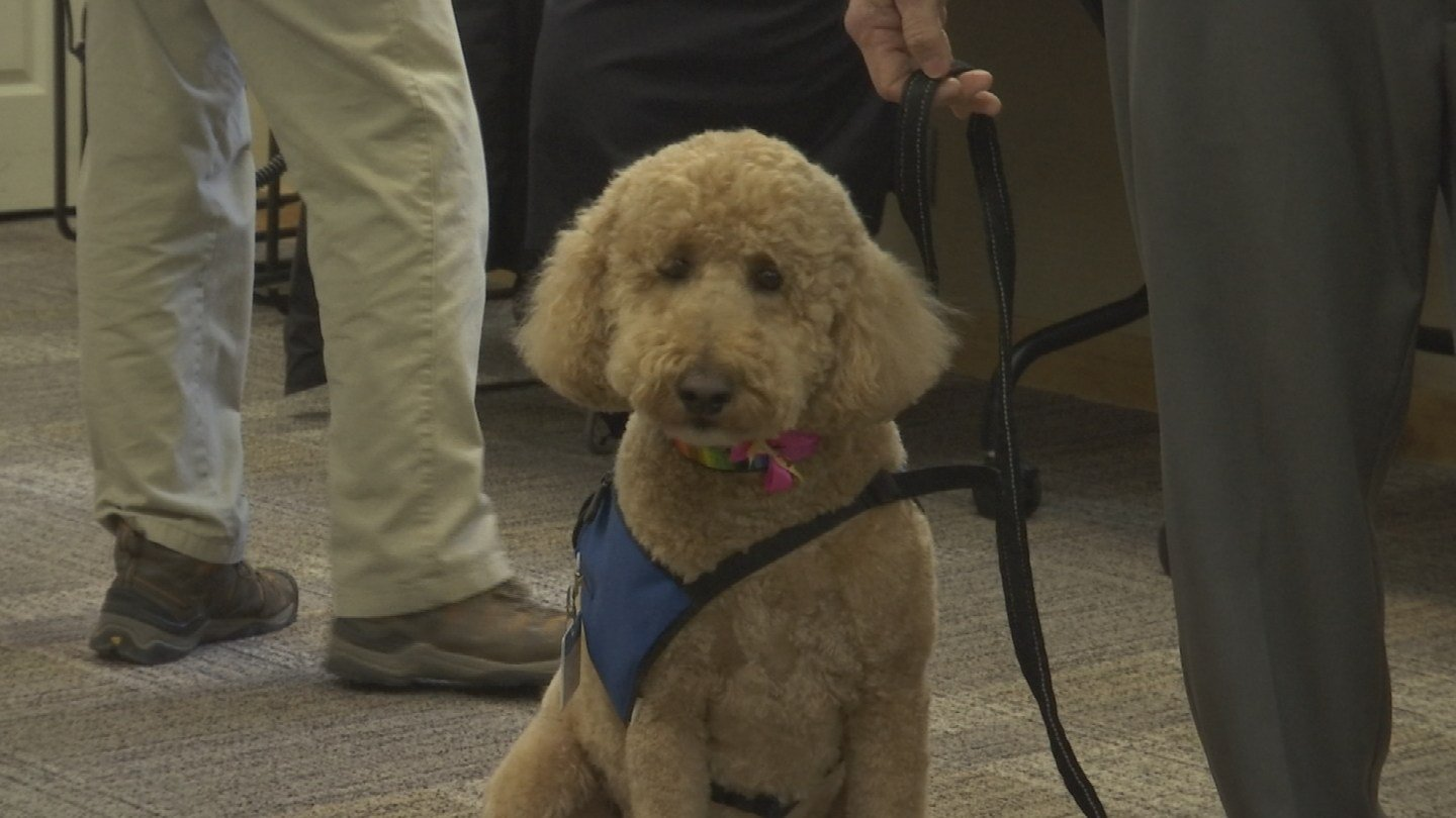 Pollyanna, a 6-year-old Goldendoodle