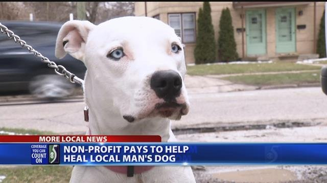 Non-profit pays to help heal local man's dog