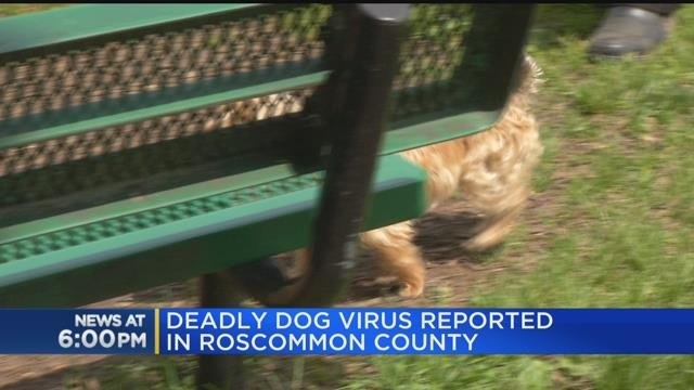 Deadly dog virus reported in Roscommon County