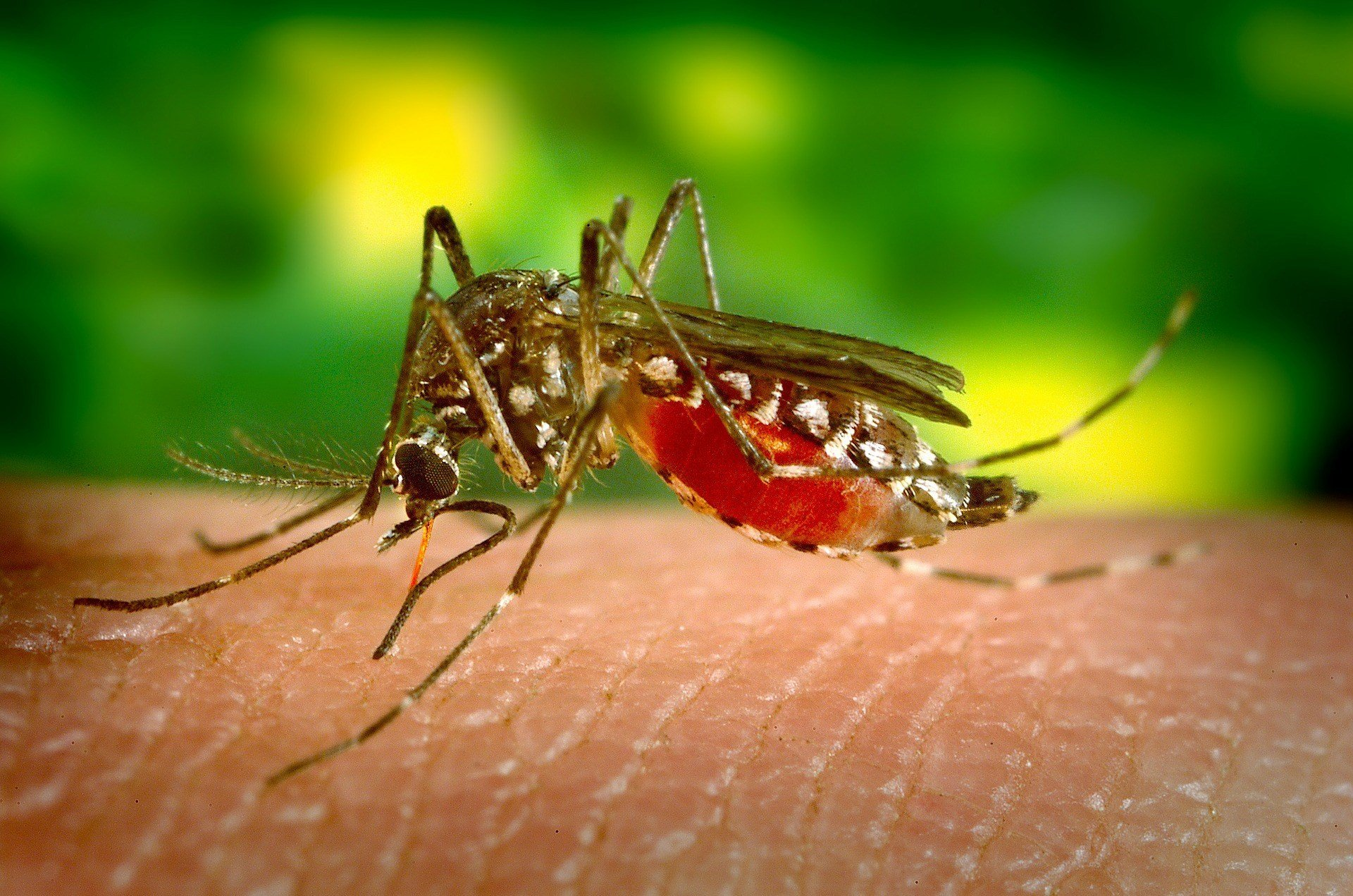 Mosquitoes with West Nile virus detected
