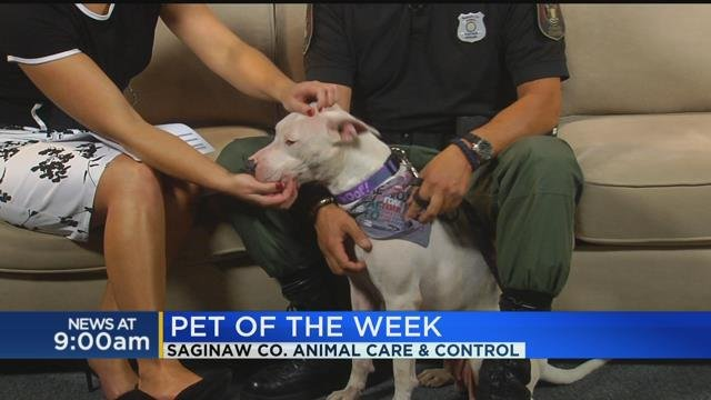 Pet of the Week: Gizmo