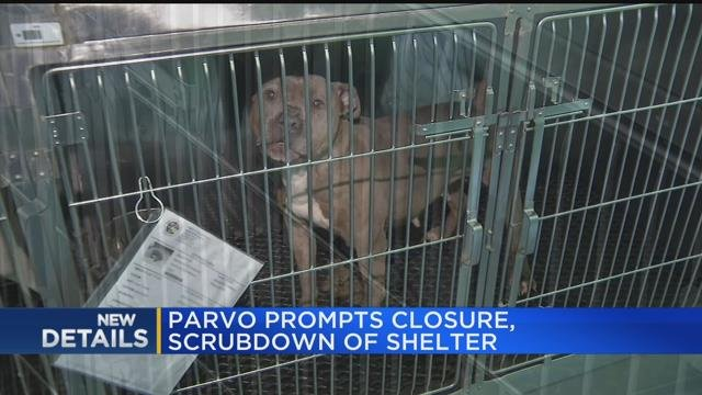 Parvo prompts closure, scrub down of shelter