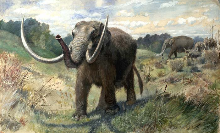 Artist rendering of what a Mastodon might have looked like thousands of years ago.