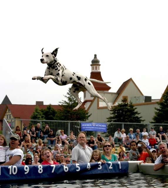 A diving dog competing in the event last year.