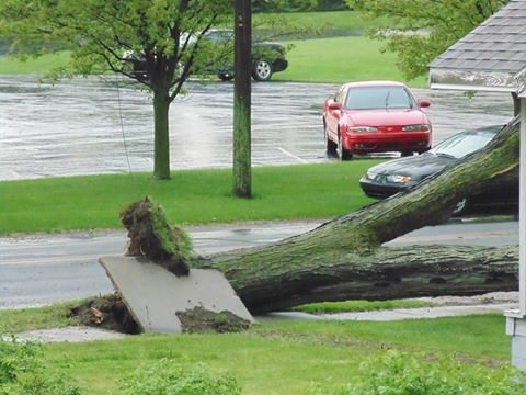 This photo shows an uprooted tree that came down during Monday's severe storms -- Alma, MI (Photo courtesy of Christopher Becker)