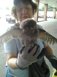 """Screech"" the Owl? That name just might stick."