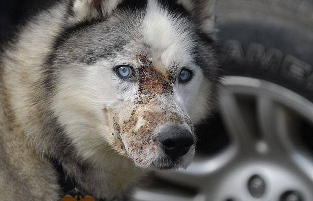 Logan was injured when an acid-based substance was thrown on his face in 2012 -- photo courtesy of Logan's Law Facebook page.