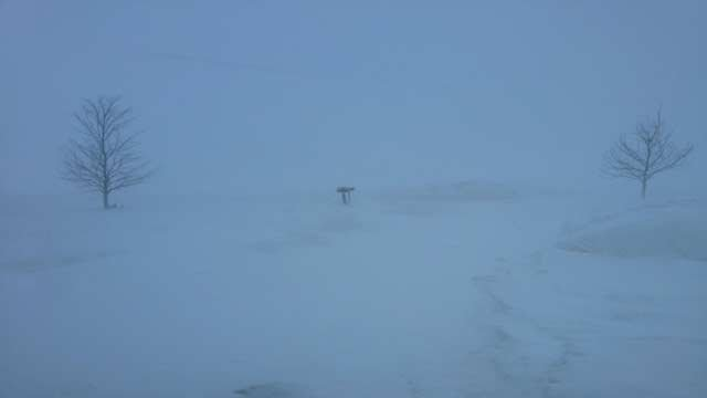 Whiteout conditions near Ruth, MI. Photo courtesy of Jan Kriewall Adler