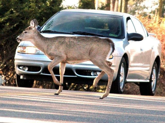 State Farm Reports Deer Hit Damage Costs Up