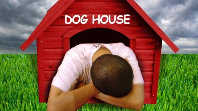 National Get Out Of The Dog House Day