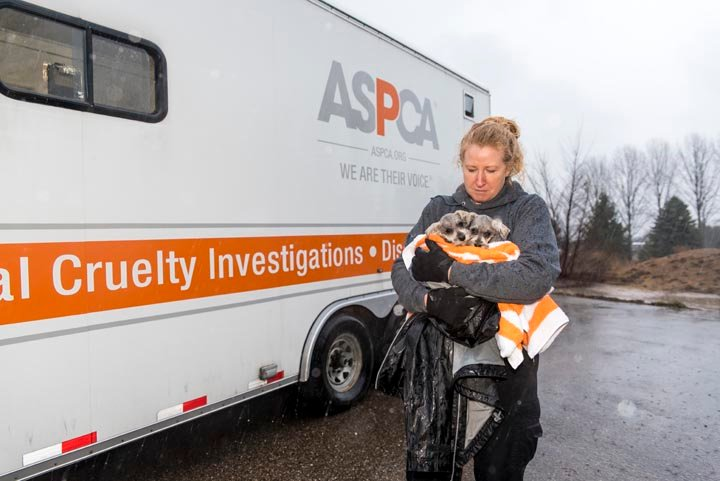 Courtesy ASPCA